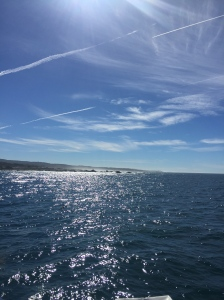 Monterey4